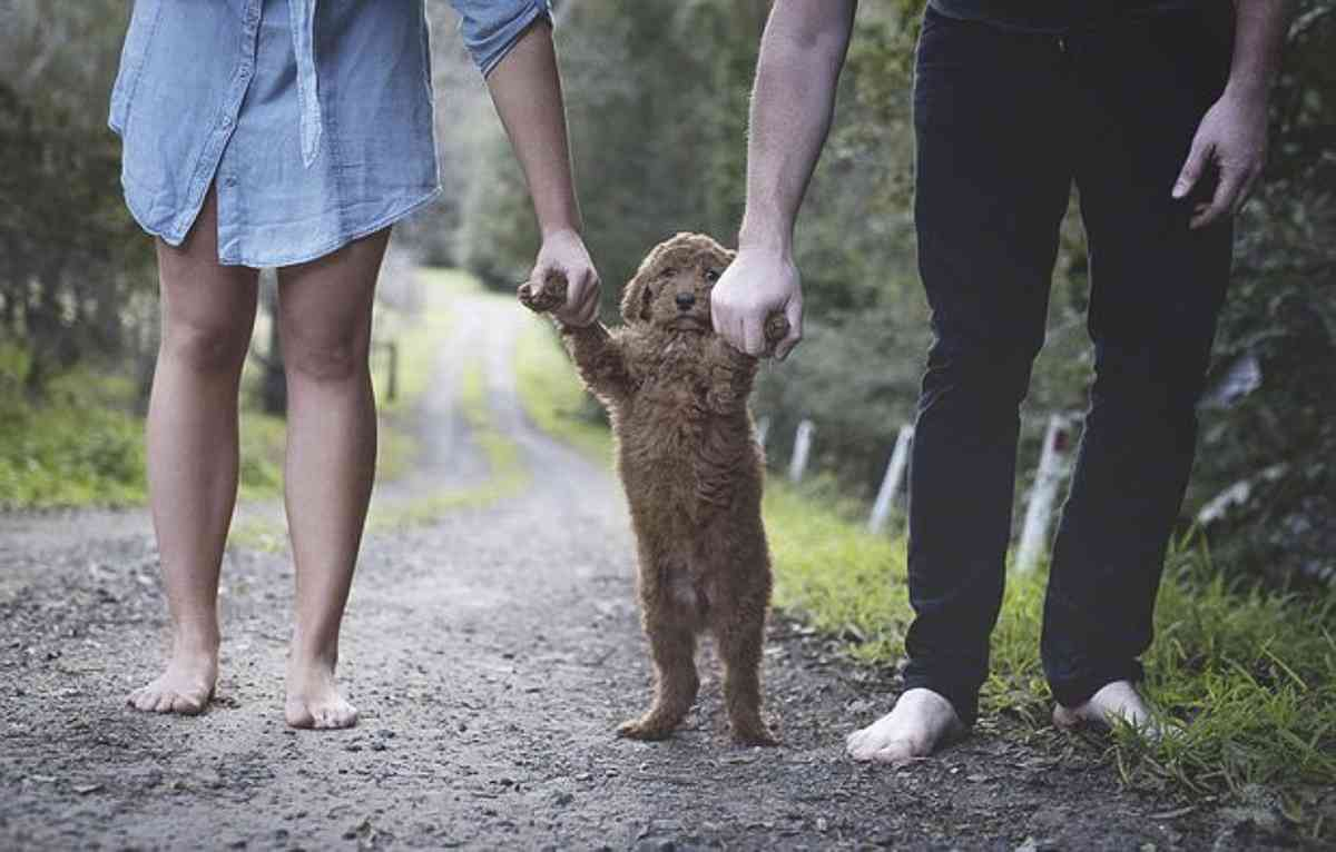 rtemagicc_ensaio_cachorro4-jpg